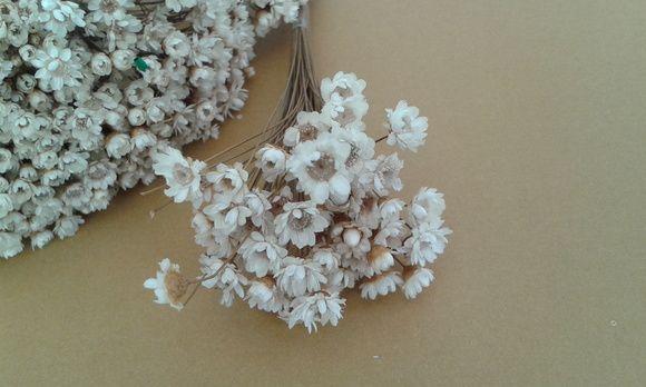 Buque De Florzinha Sempre Viva Cor Natural Flor Seca Para O Toque