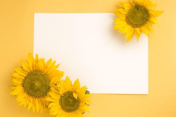 Girassol Em Papel Branco Em Branco Sobre O Fundo Amarelo